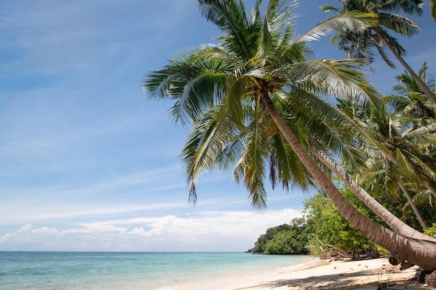 Bellissima spiaggia con acqua blu e albero di cocco