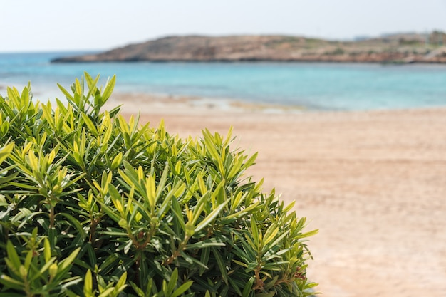 Bellissima spiaggia e mare tropicale. vacanze estive sullo sfondo. viaggi e vacanze al mare, spazio libero per il testo