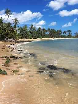 Bellissima spiaggia tropicale con grandi onde. sri lanka