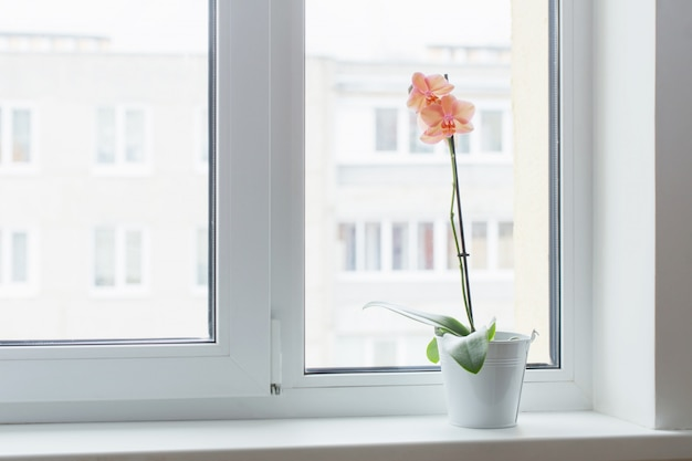 Bellissime orchidee sul davanzale