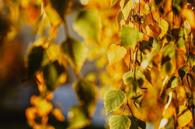 Bellissimi alberi autunnali con foglie gialle
