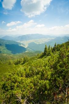 Bellissimi alberi di pino sulle montagne