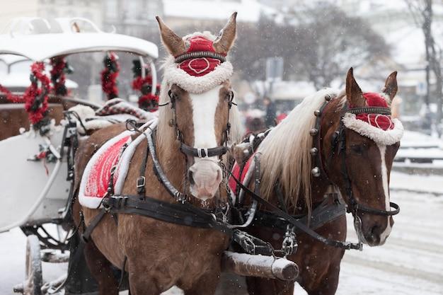 Bellissimi cavalli in strada