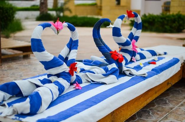 Bellissimi cigni da asciugamani sulla spiaggia in egitto