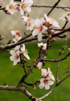 Bellissimi fiori bianchi in un albero