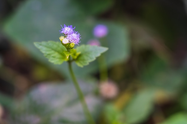 Bellissimi fiori di erba viola con sfondo sfocato