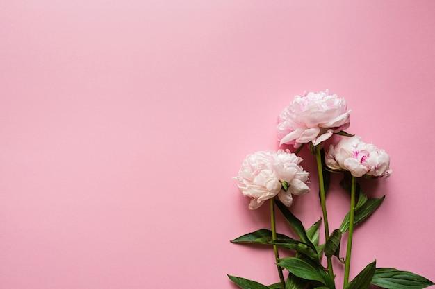 Bellissimi fiori di peonia su sfondo rosa pastello, copia spazio per il testo, vista dall'alto, stile piatto laico.