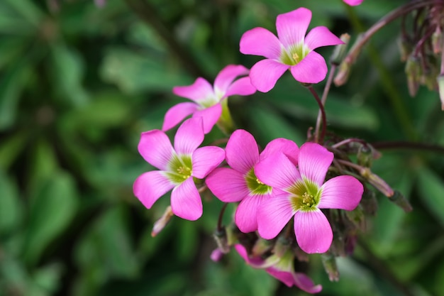 Bellissimi fiori estivi rosa