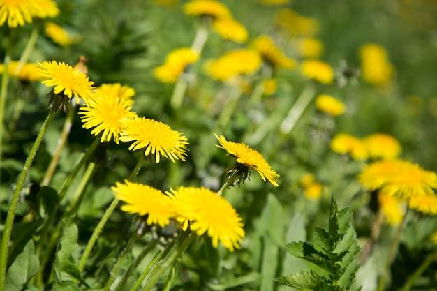 Bellissimi fiori gialli brillanti