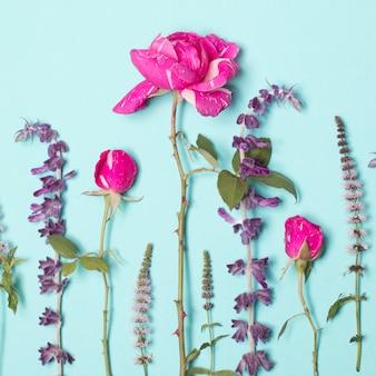 Bellissimi fiori rosa e viola