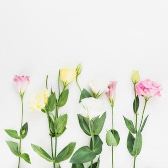 Bellissimi fiori su sfondo bianco