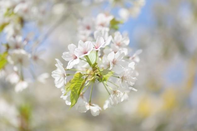 Bellissimi fiori su un ramo