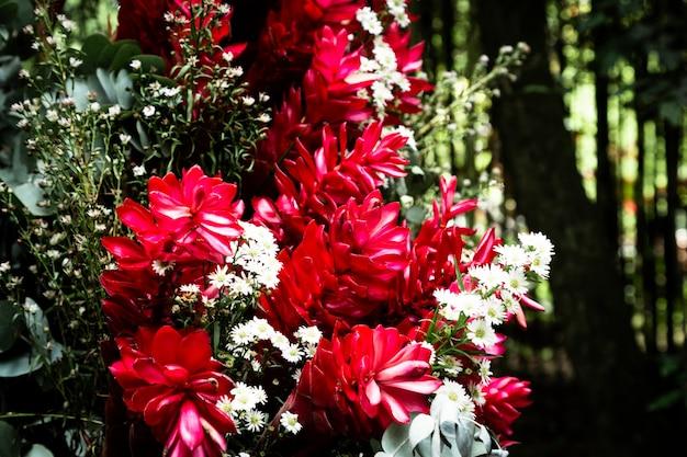 Bellissimi fiori tropicali con sfondo sfocato