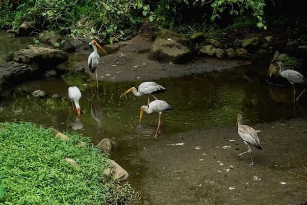 Bellissimi uccelli allo zoo tropicale.