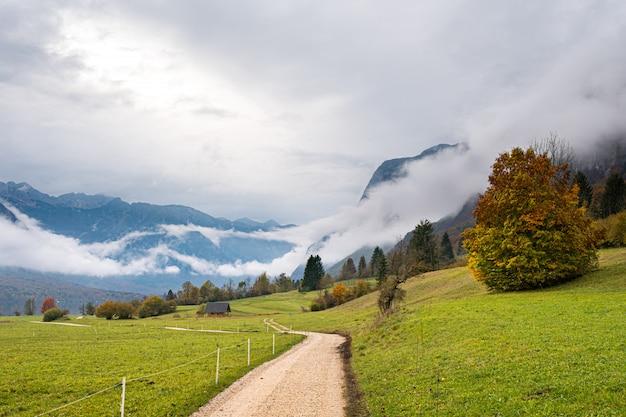 Bellissimo albero autunnale oltre alla strada nelle montagne nebbiose