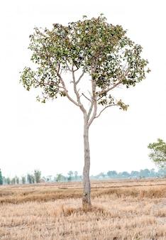 Bellissimo albero su uno sfondo bianco concetto naturale