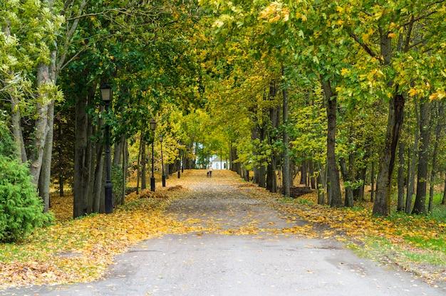 Bellissimo autunno in un parco cittadino. corridoio colorato con alberi di acero con foglie verdi e gialle e figura umana con un cane. bella scena della natura alla stagione autunnale. parco d'autunno in bielorussia