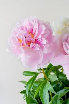 Bellissimo bouquet di peonie bianche e rosa