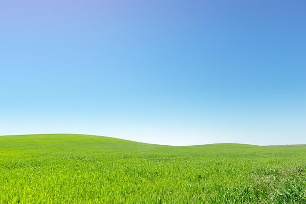 Bellissimo campo verde