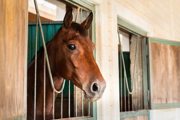 Bellissimo cavallo marrone con una squadra al ranch.