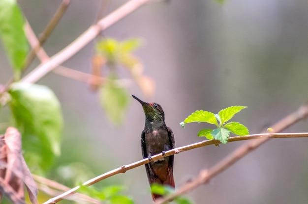 Bellissimo colibrì appoggiato su un ramo