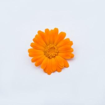 Bellissimo fiore d'arancio