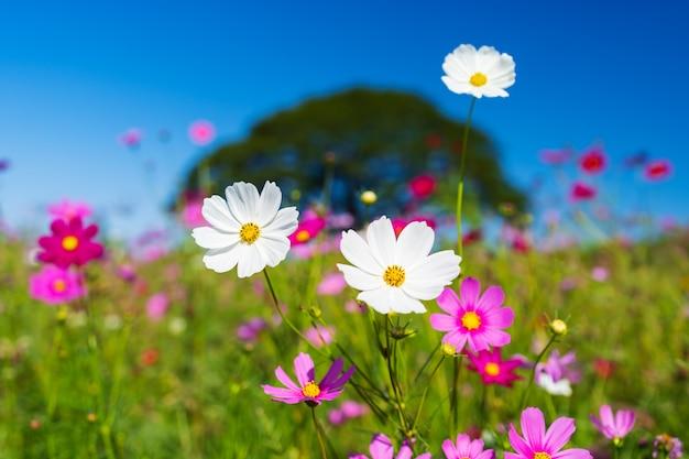 Bellissimo fiore dell'universo