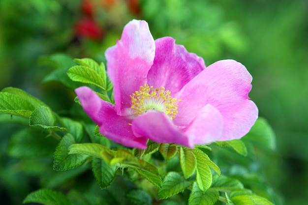 Bellissimo fiore in radica