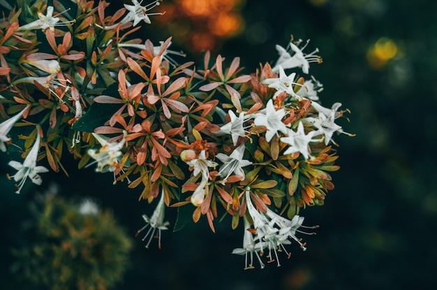 Bellissimo fiore nel parco