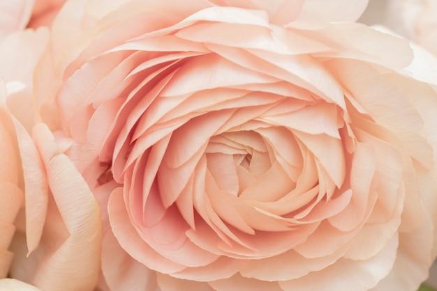 Bellissimo fiore rosa delicato