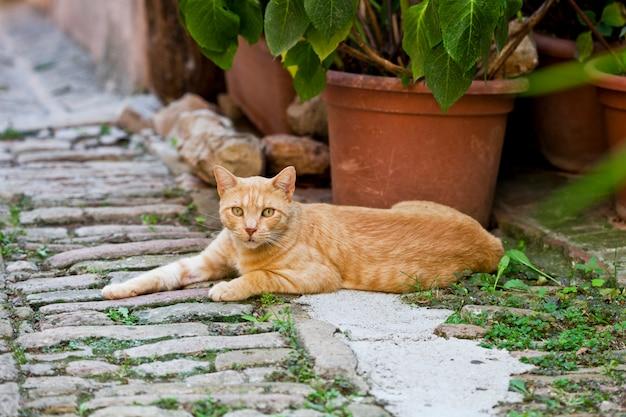 Bellissimo gatto rosso in una piccola città italiana