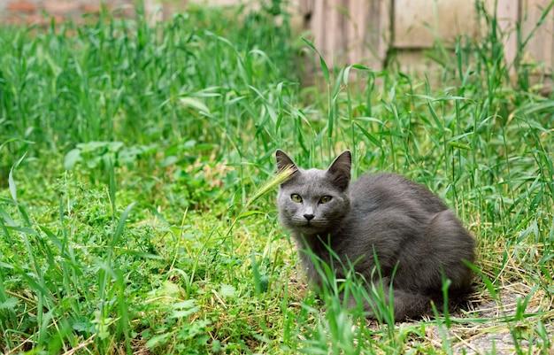 Bellissimo gatto seduto sull'erba