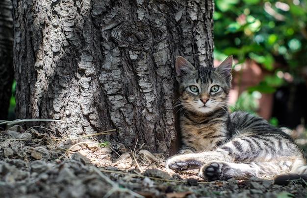 Bellissimo gatto seduto vicino a un tronco d'albero