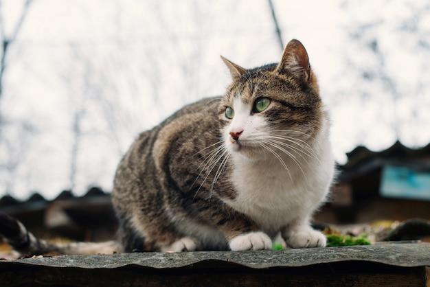 Bellissimo gatto senzatetto sul tetto di una vecchia casa distrutta. il concetto di protezione e assistenza agli animali.