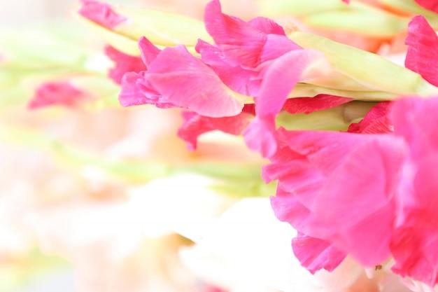 Bellissimo gladiolo floreale con sfondo bianco multiuso