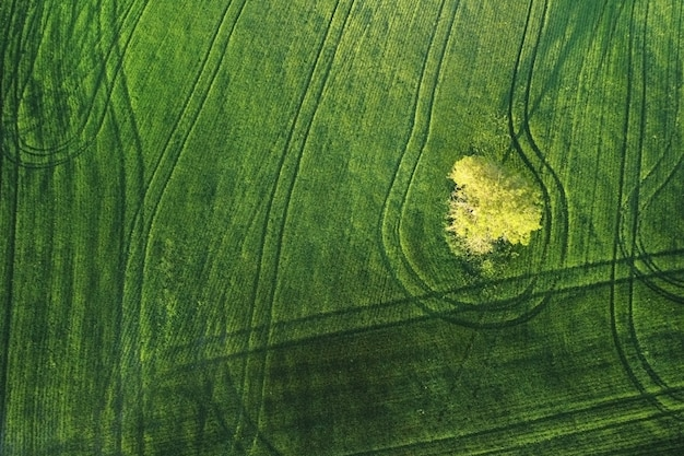 Bellissimo paesaggio aereo di un albero solitario su un campo agricolo al tramonto.