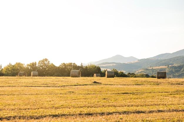 Bellissimo paesaggio con rotoli di fieno in campo