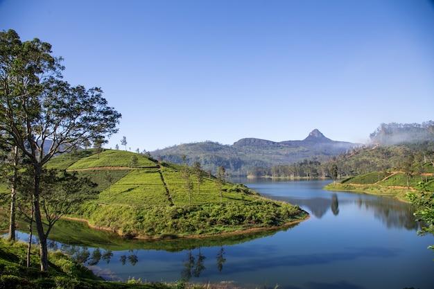 Bellissimo paesaggio della sri lanka. fiume, montagne e piantagioni di tè