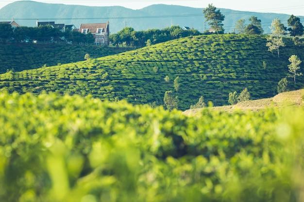 Bellissimo paesaggio di ceylon. campi di riso e piantagioni di tè