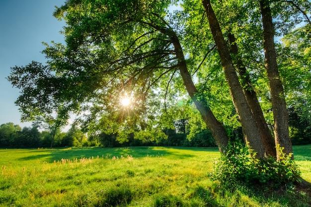 Bellissimo paesaggio estivo con querce e sole
