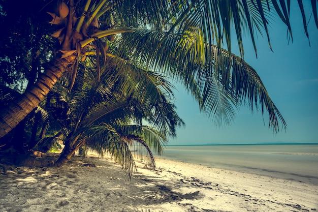 Bellissimo paesaggio estivo sulla spiaggia. sfondo naturale