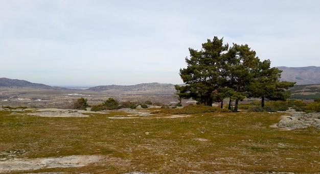 Bellissimo paesaggio naturale alcuni alberi e montagne sullo sfondo