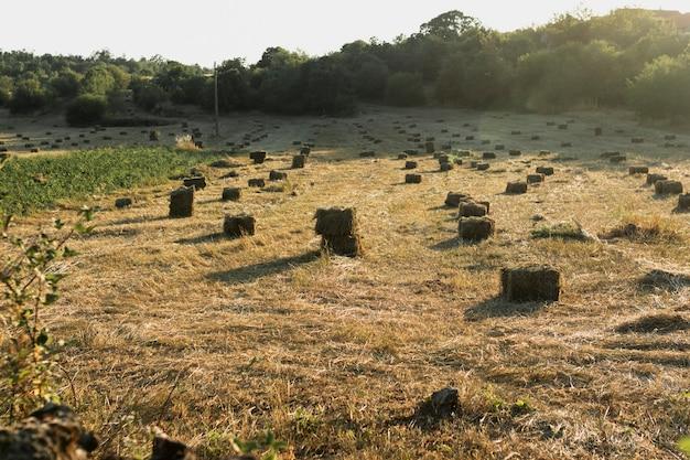 Bellissimo paesaggio pieno di covoni di fieno
