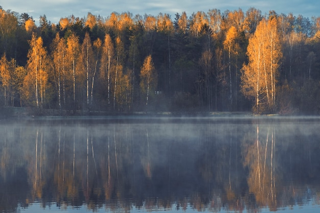 Bellissimo paesaggio soleggiato, lago nebbioso in un bosco di betulle in autunno