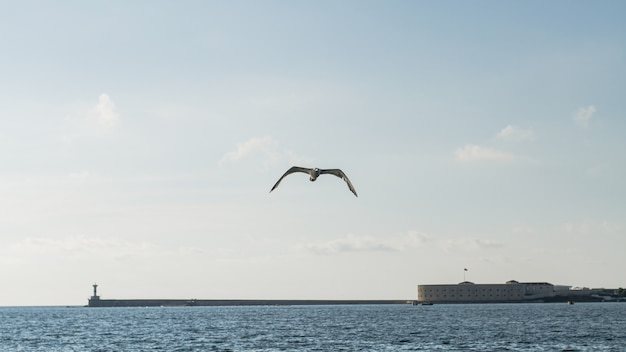 Bellissimo paesaggio sull'oceano con gabbiano