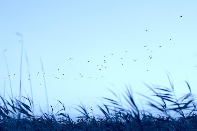 Bellissimo panorama serale. stormo di uccelli che sorvolano l'erba di prato.