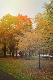 Bellissimo parco con albero e foglie colorate su erba verde in autunno.