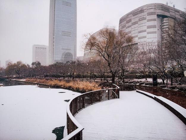 Bellissimo parco e lago sotto la neve