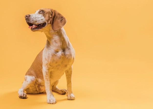 Bellissimo ritratto di cane con spazio di copia