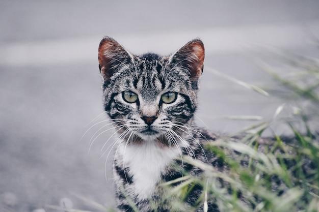 Bellissimo ritratto di un gatto in strada. sito gratuito per il testo